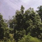 Chakrata – Where serenity dwells.